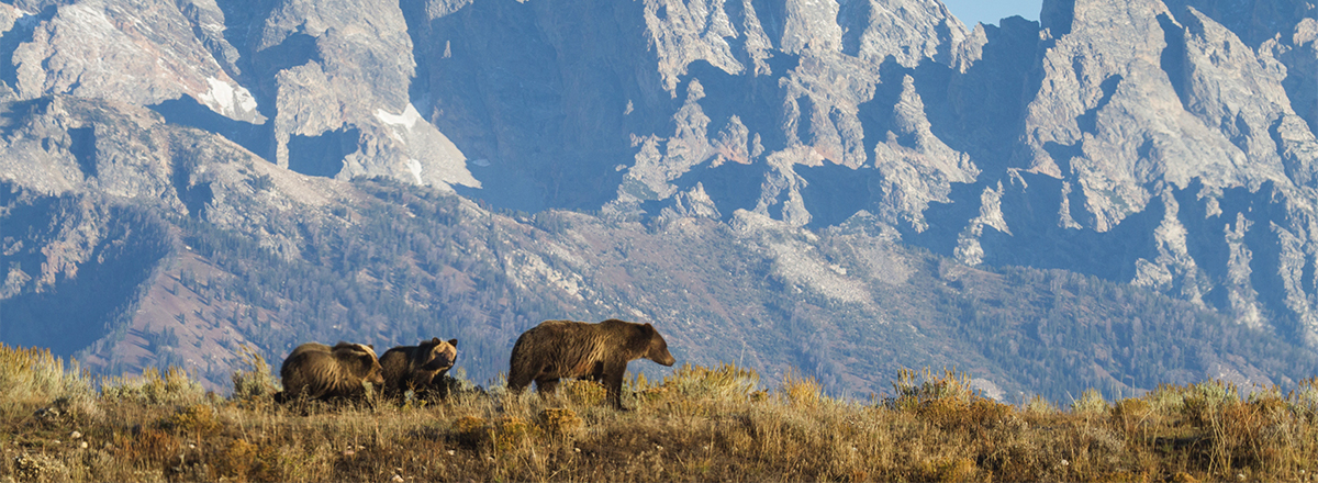 Protecting Wildlife - Protecting Cougars and Bears from Wildlife Services in Colorado