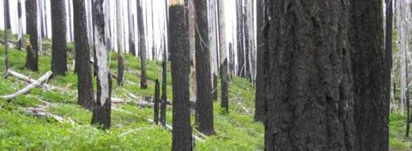 Promoting Natural Fire Recovery in California's Klamath National Forest (CA)