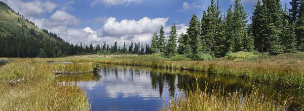 Wetland Jewels (NM)