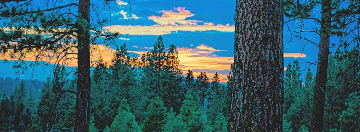 Protecting Oregon's Ochoco National Forest From ORVs