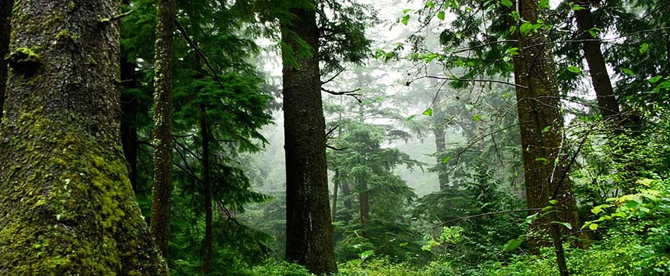 Northwest Forest Plan, Survey & Manage Standard: Rare Species Protected