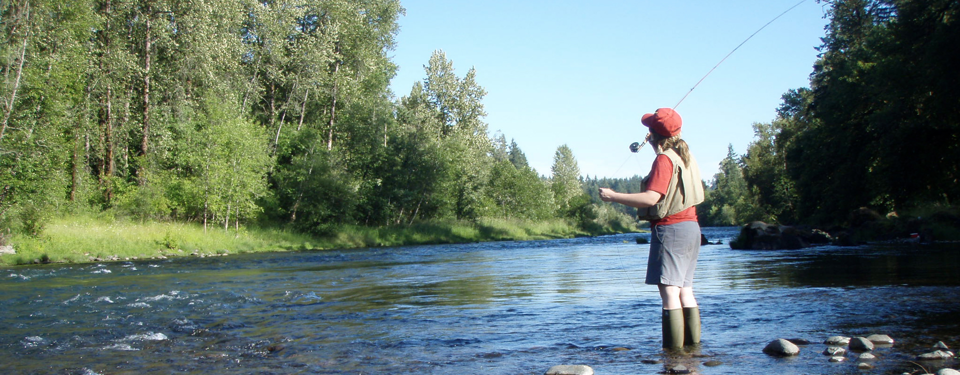 Protecting Native Steelhead in the North and South Santiam Rivers