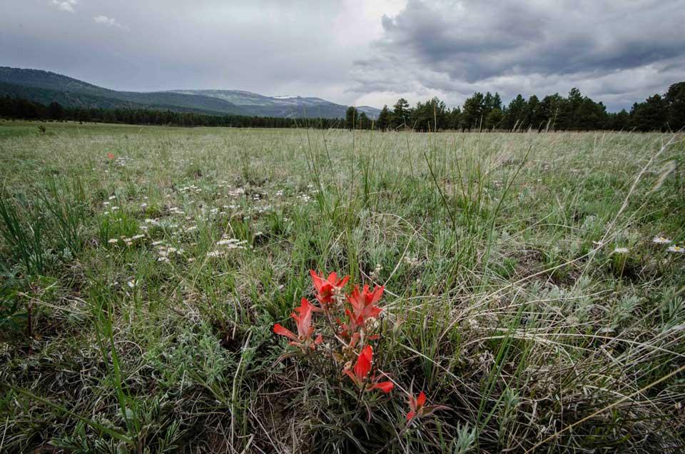 Valle Vidal Red Flower