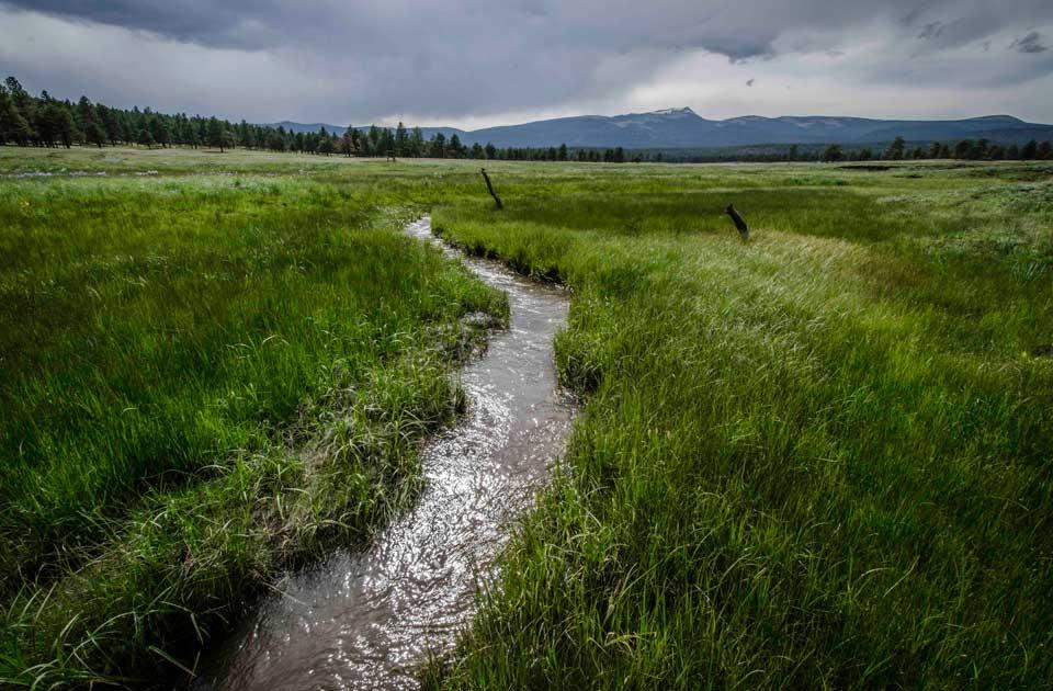 Valle Vidal Stream