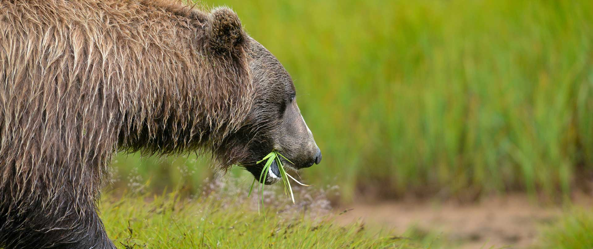 Controlling Bear Baiting in Grizzly Habitat