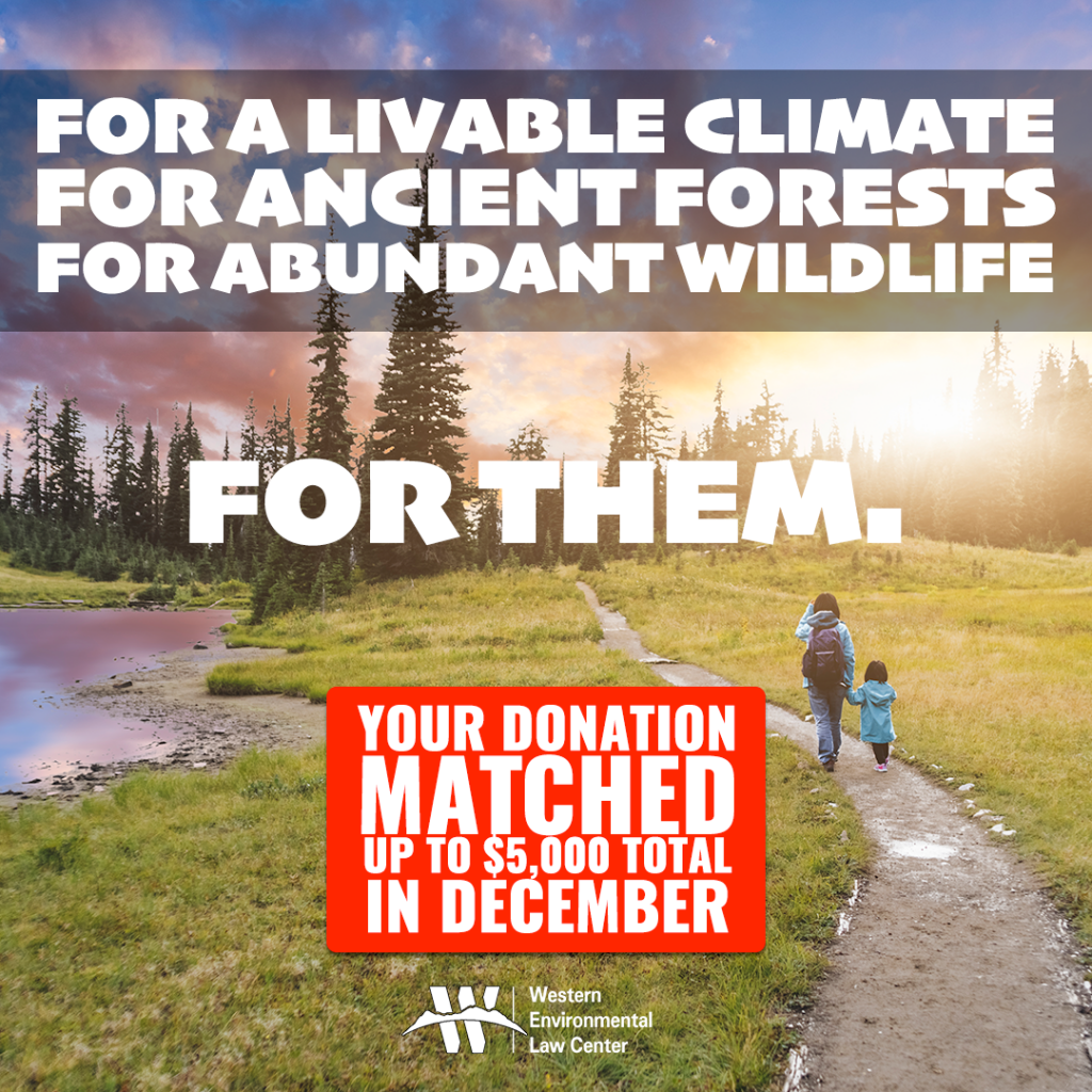 For a livable climate, for anciuent forests and for abundant wildlife. For our children. Your donation is matched up to $5000 total in December.